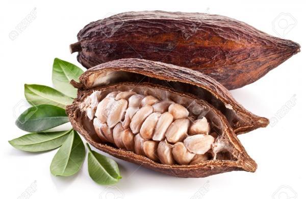 preview Cocoa Bean