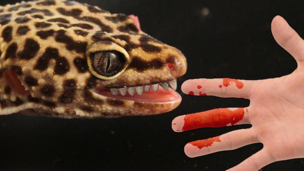 preview Leopard Gecko