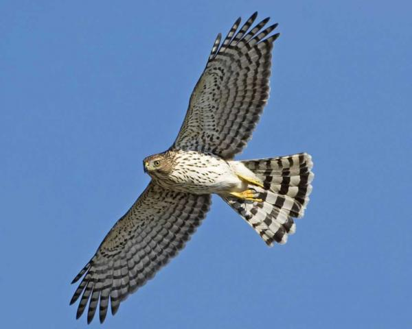 preview Hawk