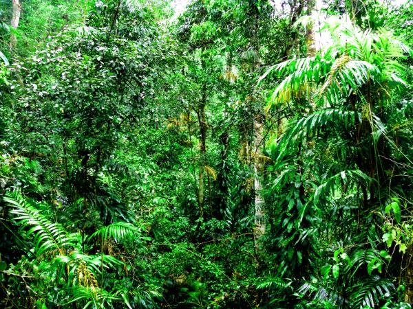preview Kuranda Rianforest