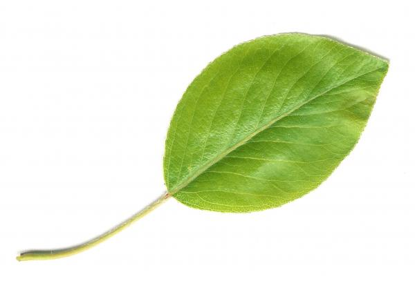 preview Leaf