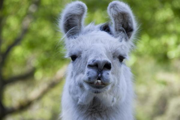 preview Llama