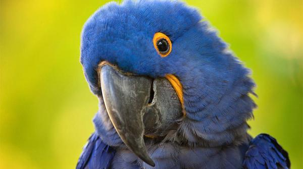 preview Macaw