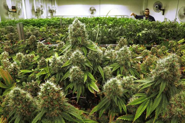 preview Marijuana