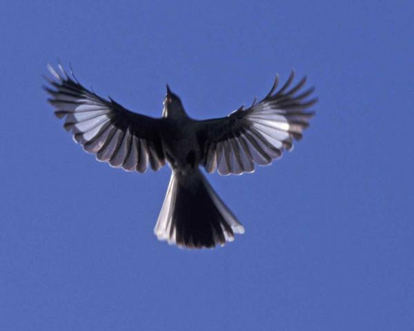 preview Mockingbird