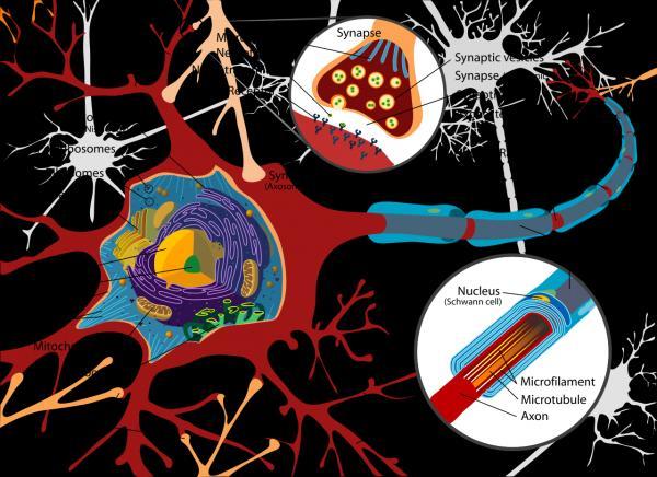 preview Neuron
