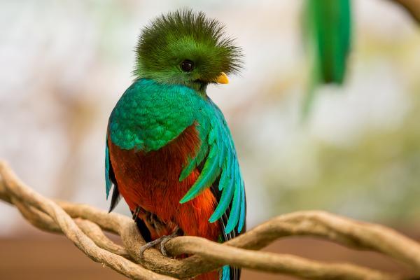 preview Quetzal