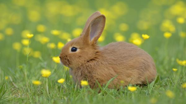 preview Rabbit