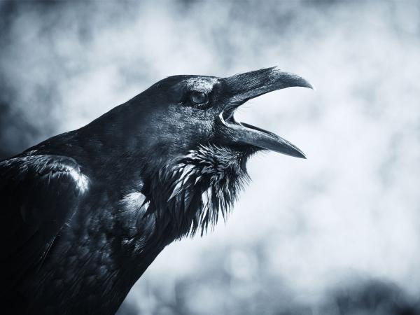 preview Raven