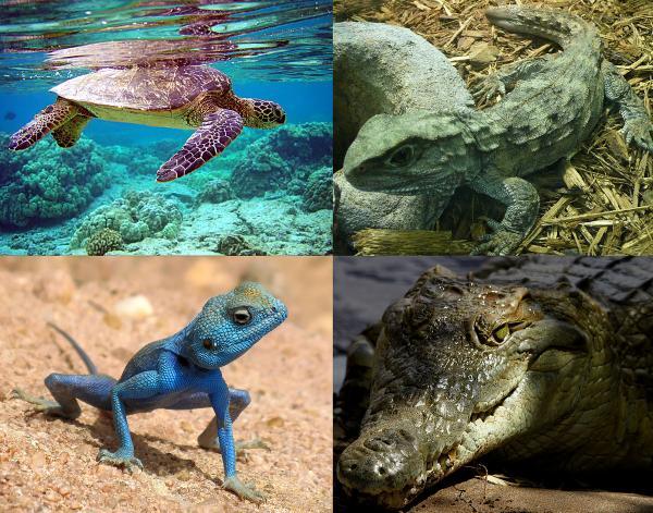 preview Reptile