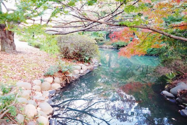 preview Shinjuku Gyoen Garden