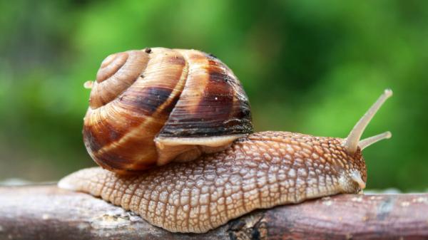 preview Snails