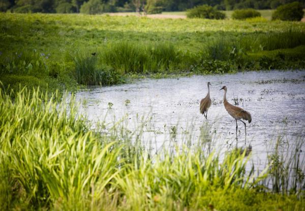 preview Wetlands